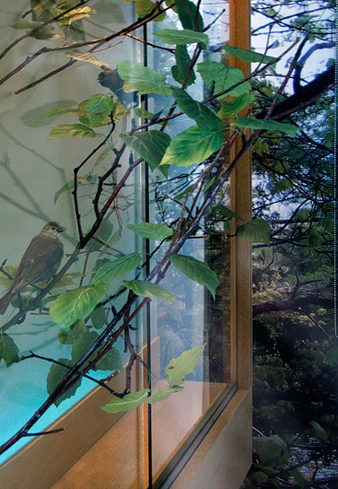 Vagabond Vitrine, 2010, Cowbird, birch branches and photomural.